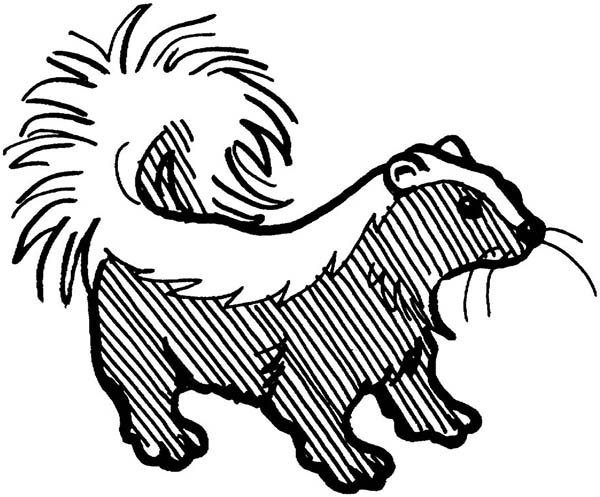 Skunk, : Amazing Stripped Skunk Coloring Page