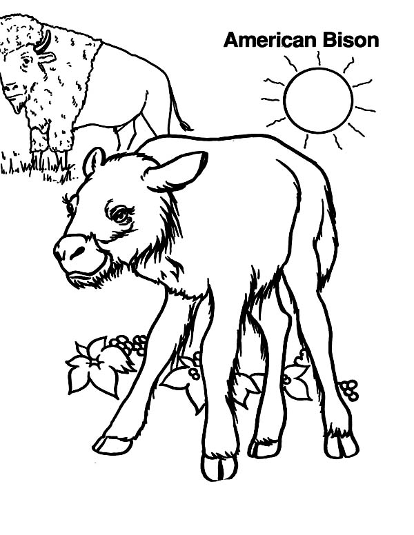 American bison coloring page color luna for Bison coloring pages