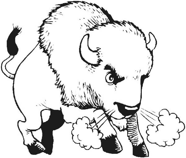 Angry bison drawing images galleries for Bison coloring pages