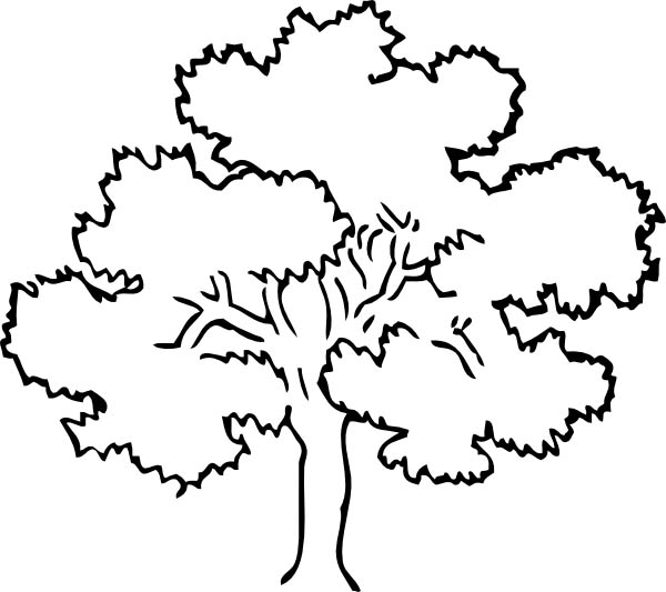 Awesome Drawing Oak Tree Coloring Page Color Luna
