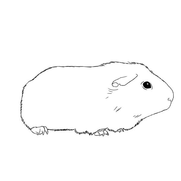 Awesome Guinea Pig Coloring Page Color Luna