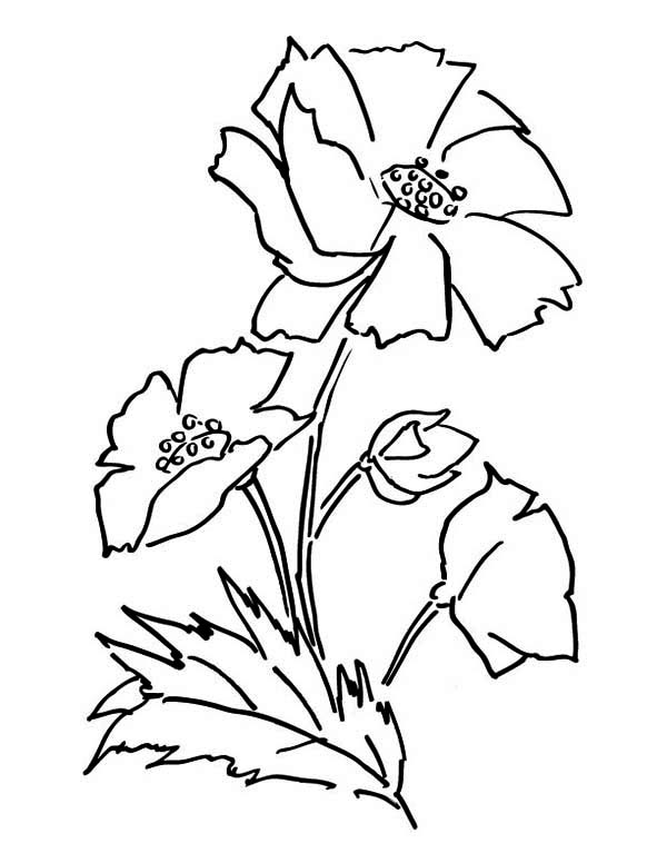 california poppy coloring page - awesome picture of poppy coloring page awesome picture of