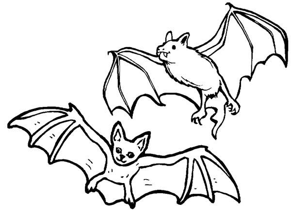 Bats, : Bats Couple Coloring Page