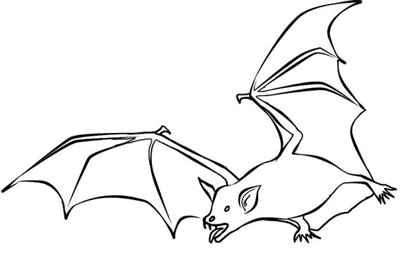 Bats, : Bats Hunt for Food Coloring Page