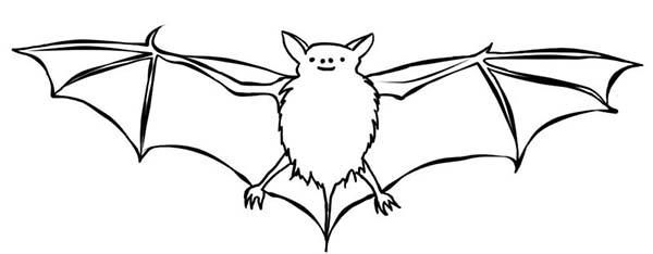 Bats, : Bats Picture Coloring Page
