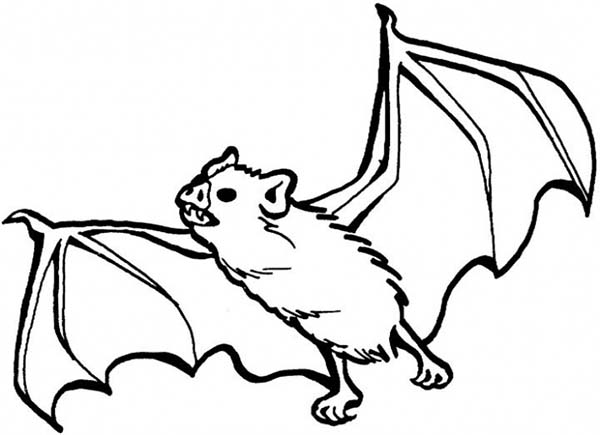 Bats, : Bats Sharp Teeth Coloring Page