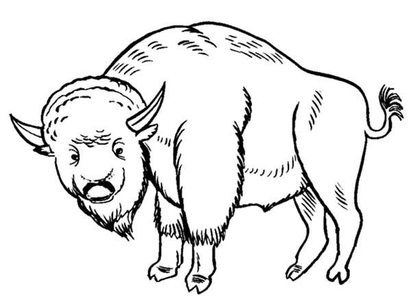 Bison, : Bison Coloring Page for Kids