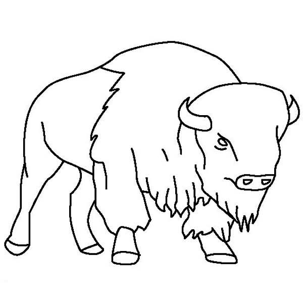 Bison, : Bison Outline  Coloring Page
