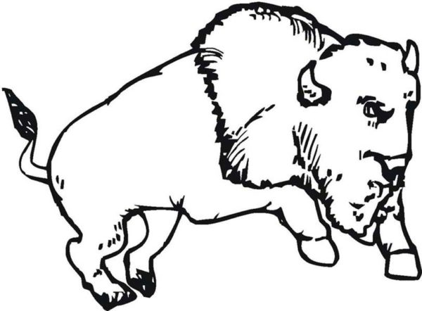 Bison, : Bison Running Wild Coloring Page