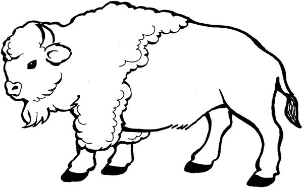 Bison walking around coloring page bison walking around for Bison coloring pages