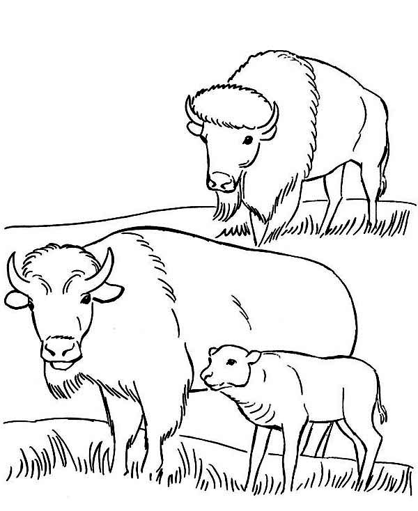 Bison, : Bison and Baby Bison Eating Coloring Page