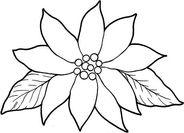 pointsettas coloring pages - photo#16