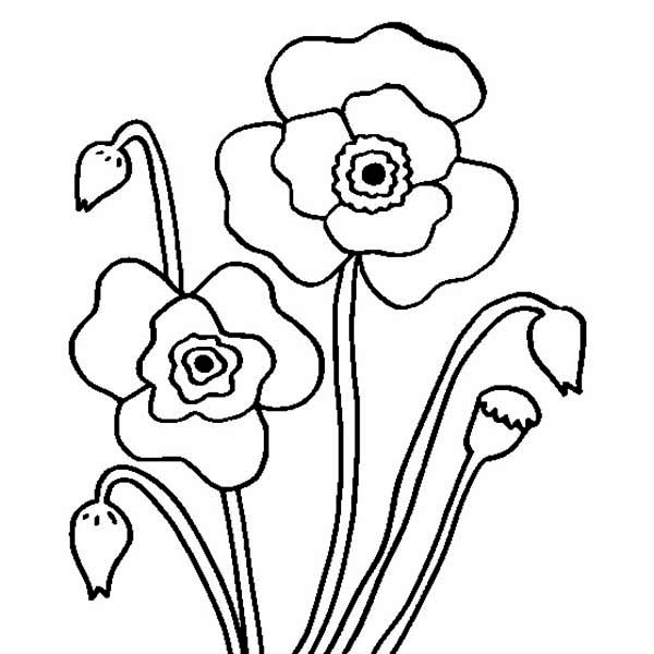 Poppy, : Blossom Poppy Flower Coloring Page