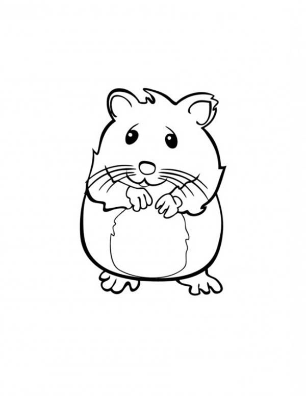 Cute Hamster in Guinea Pig Coloring Page Color Luna