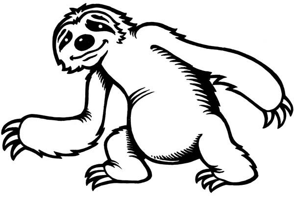 Sloth, : Cute Little Sloth Coloring Page