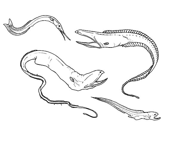 Eel, : Deep Sea Eel Picture Coloring Page