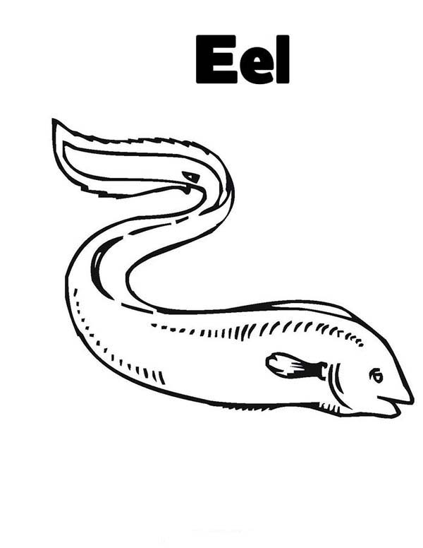Eel, : Eel Coloring Page for Kids