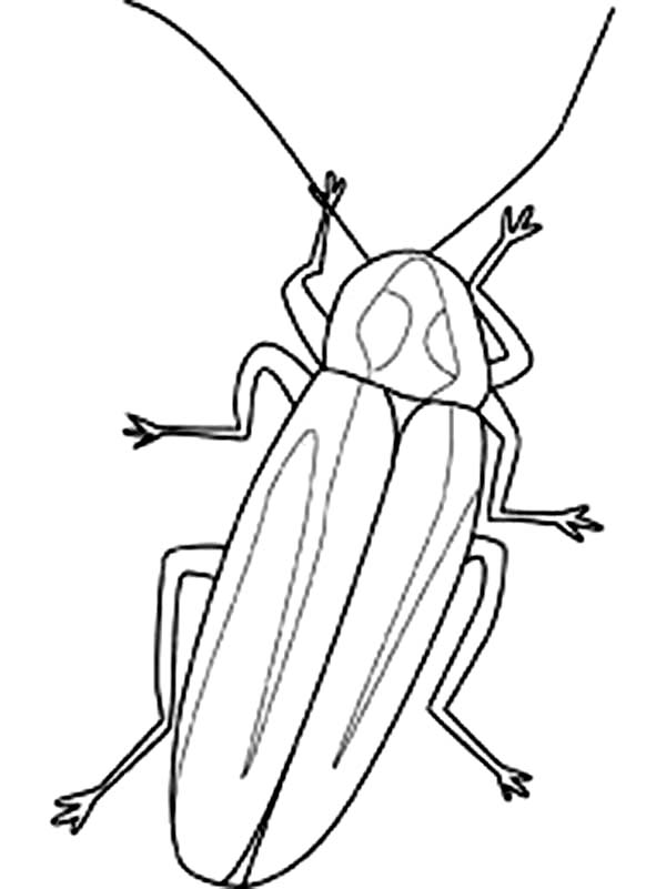 Firefly, : Firefly Image Coloring Page