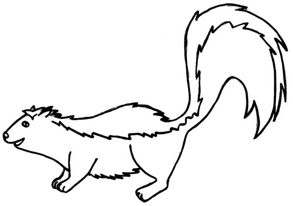 Skunk Coloring Pages BirthdayColoringPrintable Coloring Pages