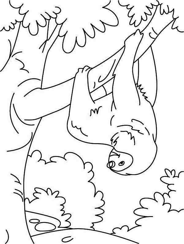 Funny Animal Sloth Coloring Page | Color Luna