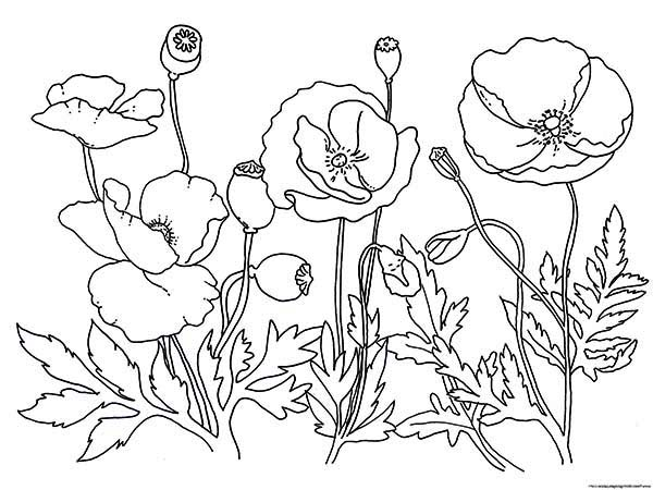 Garden of poppy coloring page color luna for Poppy coloring page