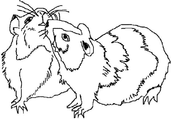 Guinea Pig Mating Coloring Page | Color Luna