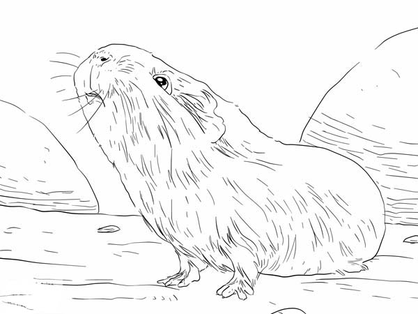 Guinea Pig Smelling Food Coloring Page
