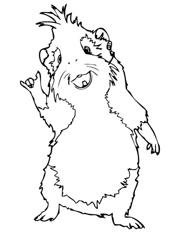 Guinea Pig, : Guinea Pig Standing Coloring Page