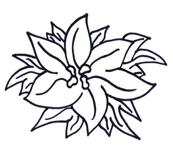 Poinsettia, : Happy New Year Poinsettia Coloring Page