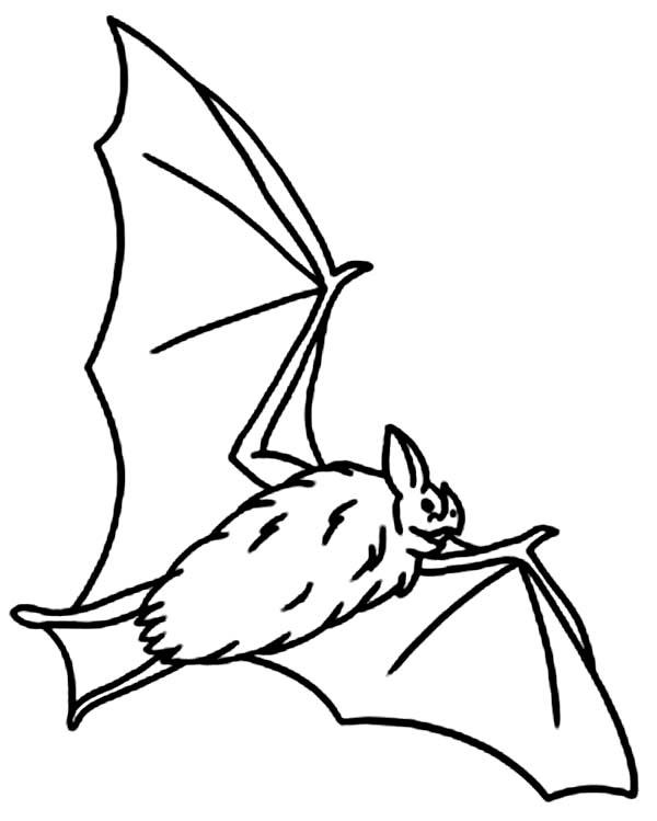 Bats, : Hungry Bats Coloring Page