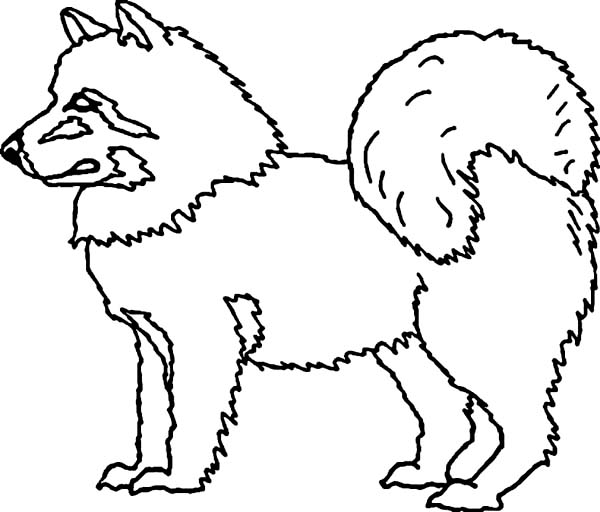 Eskimo, : Husky Dog is Eskimo Pet Coloring Page