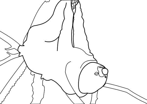 Sloth, : Kids Drawing of Sloth Coloring Page