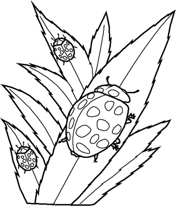 Lady Bug, : Lady Bug Eating Leaves Coloring Page