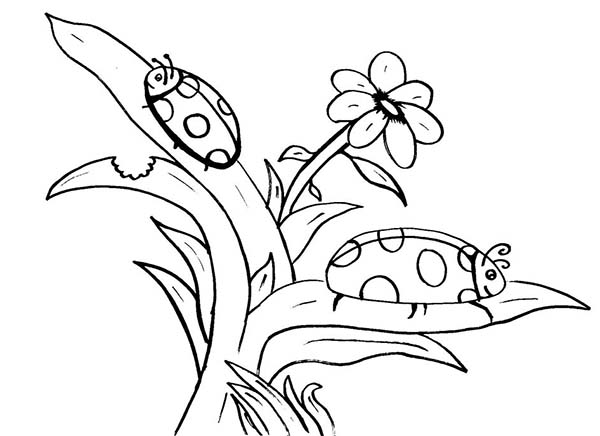 Lady Bug, : Lady Bug Find His Mate Coloring Page