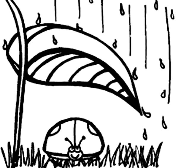 Lady Bug, : Lady Bug in the Rain Coloring Page