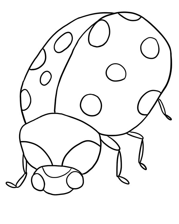 Lady Bug, : Lady Bug is Angry Coloring Page