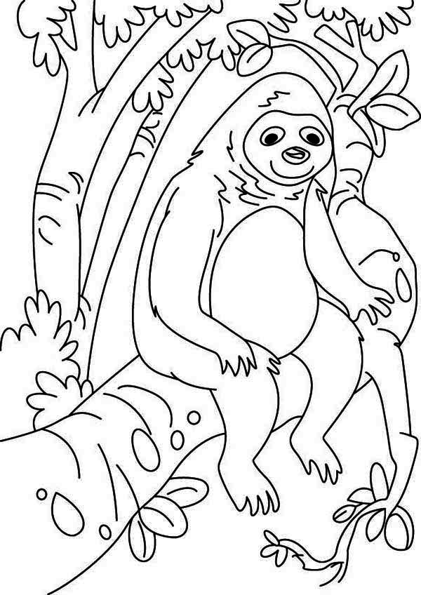 Sloth, : Lazy Animal Sloth Coloring Page