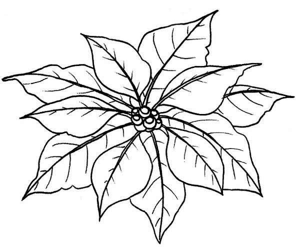 leaves of poinsettia coloring page color luna