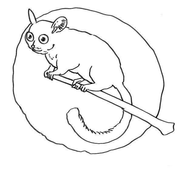Lemur, : Lemur Awake in the Night Coloring Page