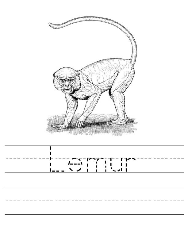 free printable step by step how to draw a lemur