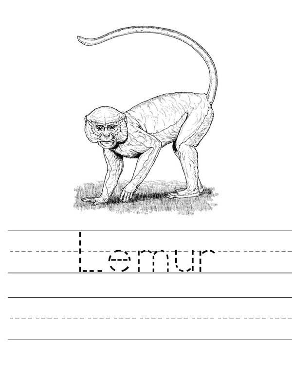 Lemur, : Lemur WorkSheet Coloring Page