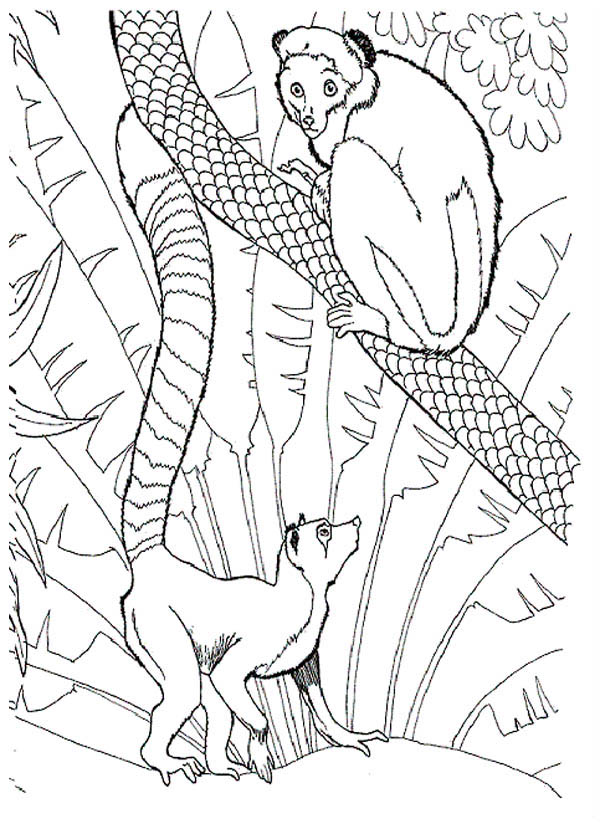 Lemur in the Zoo Coloring Page Color Luna