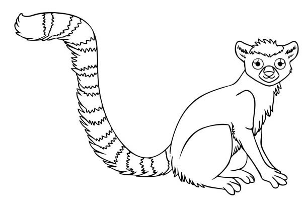 Little Ring Tailed Lemur Coloring Page Color Luna