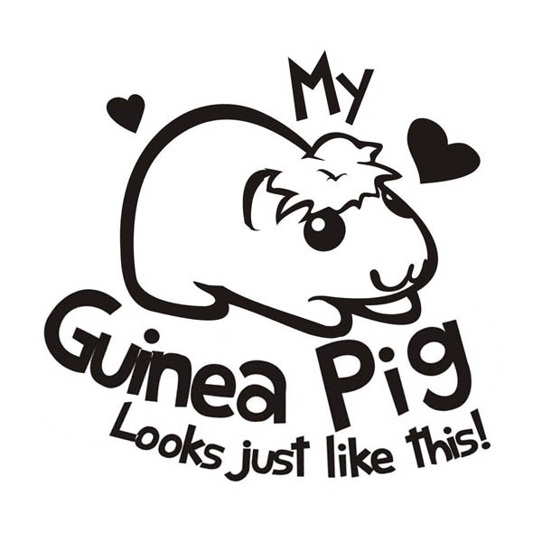 Guinea Pig, : My Guinea Pig Coloring Page