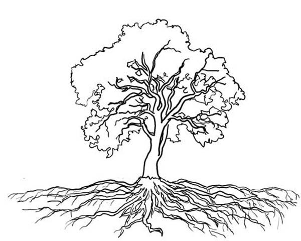 Oak Tree, : Oak Tree Massive Roots Coloring Page