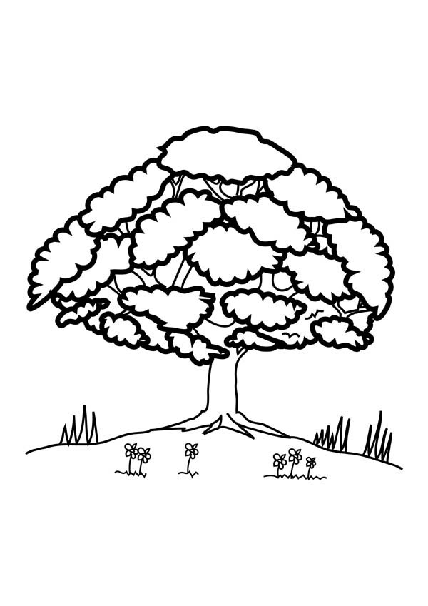 Oak Tree, : Oak Tree Up at Hill Coloring Page