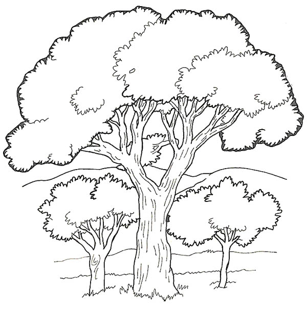 Oak Tree in the Forest Coloring Page Color Luna