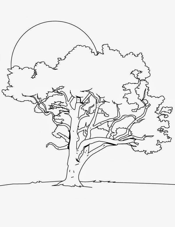 Oak Tree, : Oak Tree in the Night Coloring Page