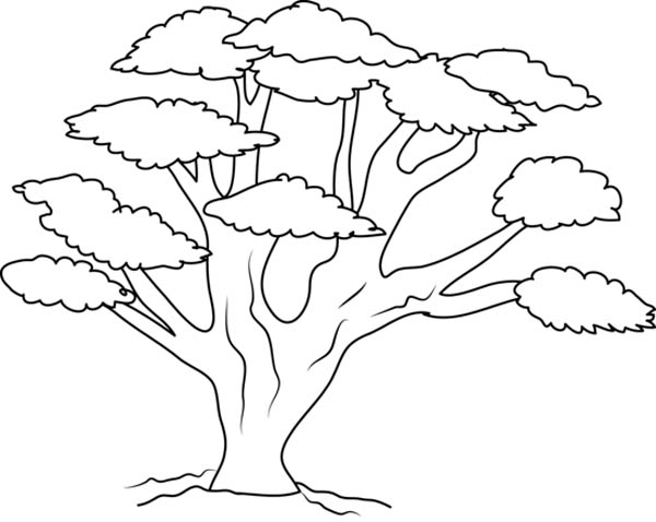 Oak Tree with So Many Branch Coloring Page Color Luna