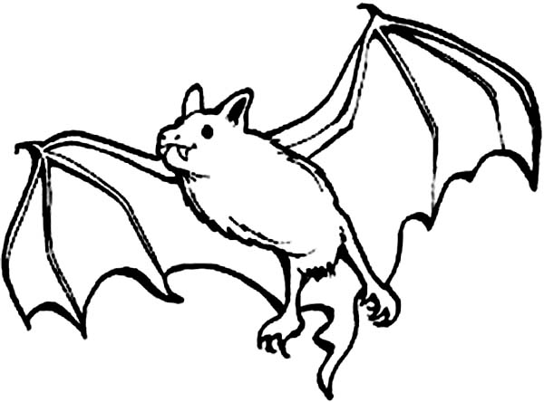 Picture of Bats Coloring Page | Color Luna